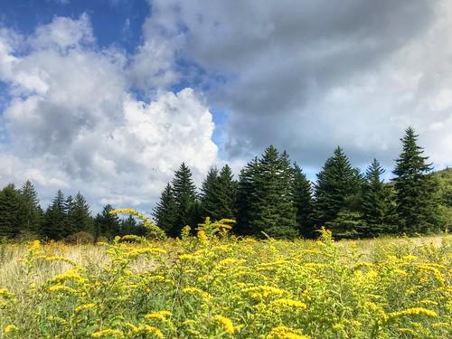 landscape goldenrod trees sky clouds graysonhighandsstatepark massiegap nature