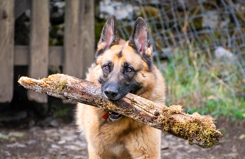 My stick my rules...