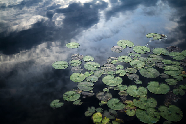 Clouds and Lily Pads