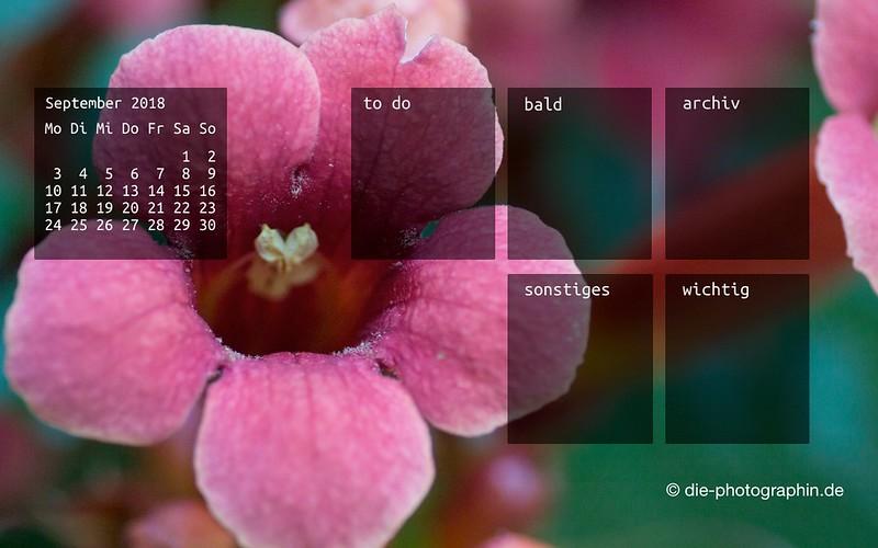092018-blume-organizedDesktop-wallpaperliebe-diephotographin