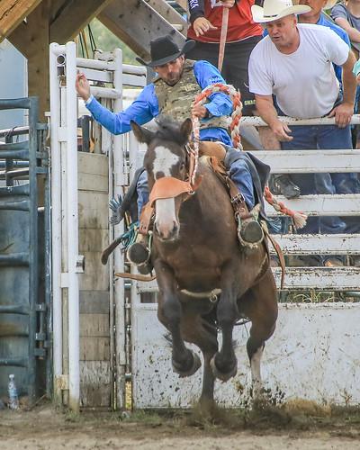 2018 CPRA Cochrane Aug11 - Saddle BroncB 327 | by calgarypolicerodeophotos