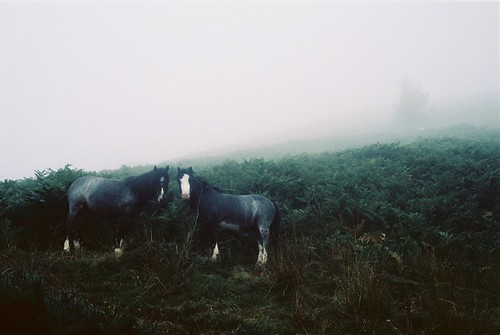 Chevaux sauvages 2 | by Gustave_Jules