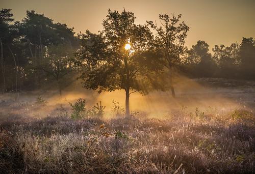 morning fog light sunrise sunlight rays nikon nikond750 mist mood atmosphere peterbijsterveldphotography peterbijsterveldpictures