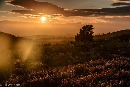 eveninglight flare heather landscape moorland northyorkmoors northyorkshire