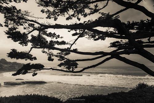 kiltro california carmel árbol tree cypress paisaje landscape cielo sky agua water sea mar ocean wave usa coast seascape