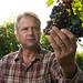 USDA & Winery vs. Spotted Lanternfly