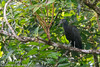 Green Ibis by igerarddejong