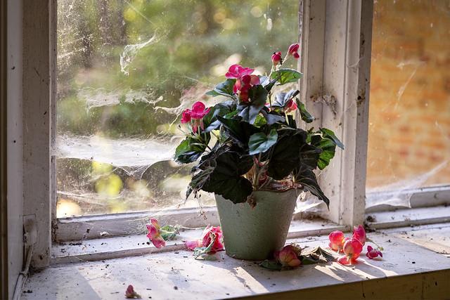 Old plastic flower