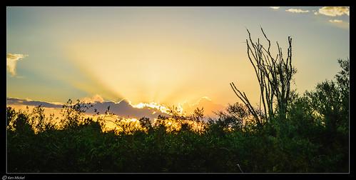 arizona clouds cloudscape desert kenmickelphotography landscape landscapedesert ocotillo outdoors papagopark phoenix plants sky sunrays nature photography silhouette silhouettes sunset unitedstates us