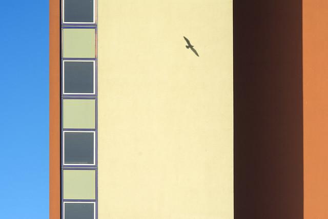 Facade and a shadow of a flying bird