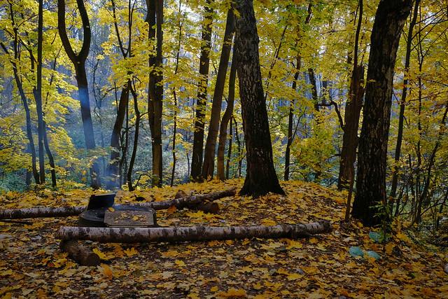 Abnormally warm autumn. Moscow region, Russia