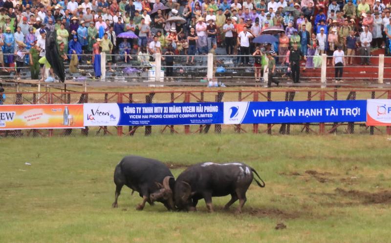 buffalofight2018