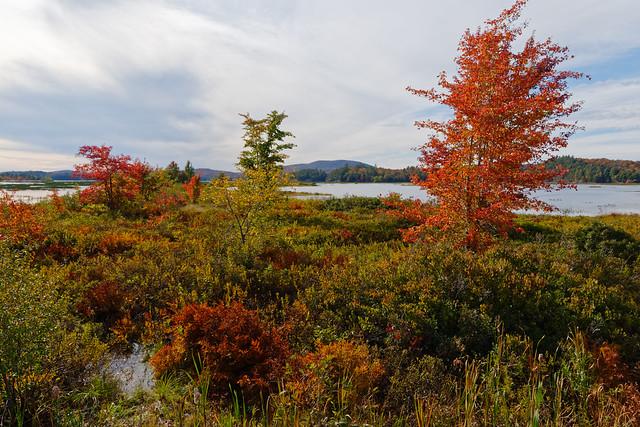 Raquette River Foliage