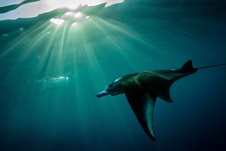 Early morning snorkeling | by Luko GR