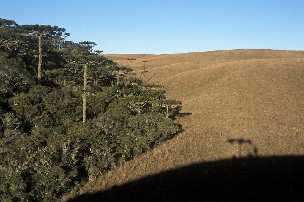 181A521- Parque Nacional de Aparados da Serra - SC RS.JPG