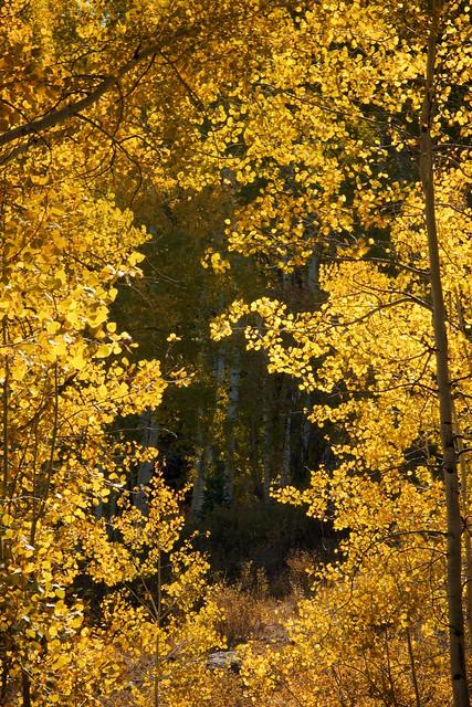 Framed in Gold