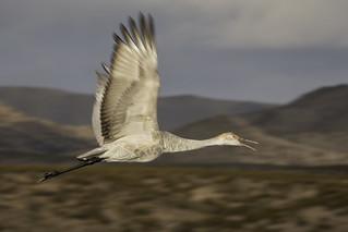 Flying Away | by snowpeak