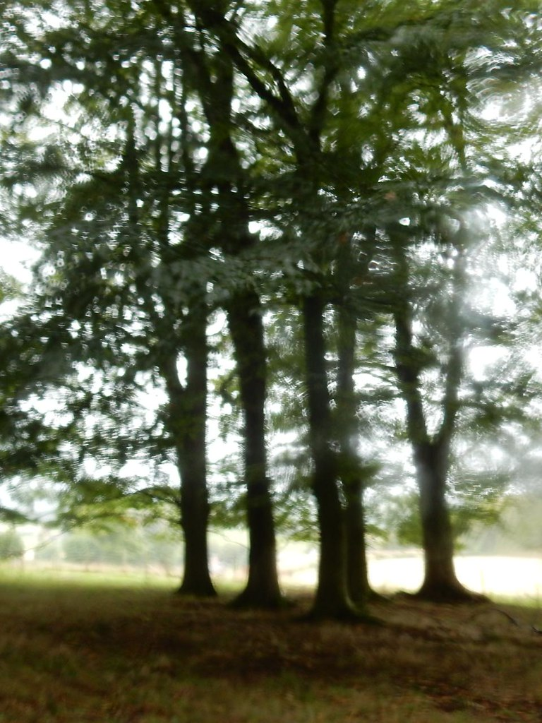 Trees through raindrops Oxted Circular