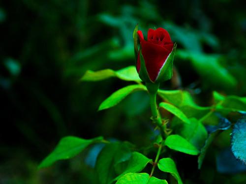 PA030032_edited | by atanis7