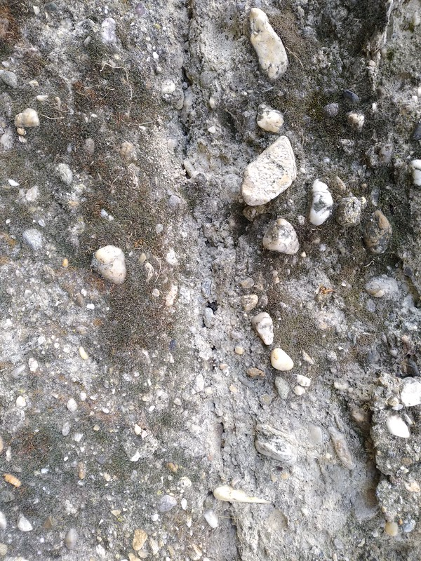 Concrete texture #50