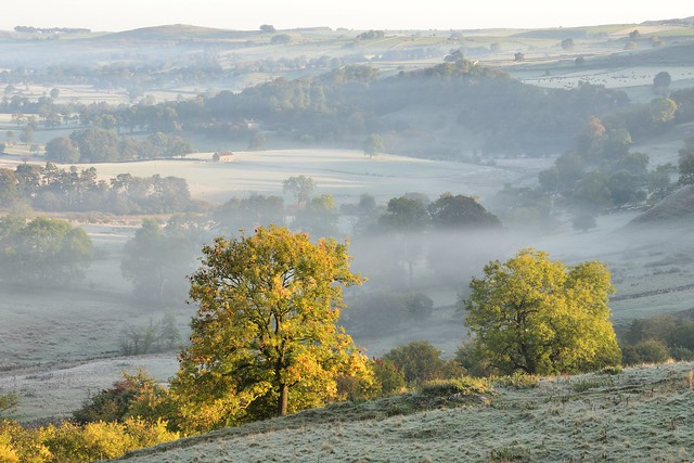 Mist and Frost
