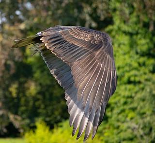 Headless Bird   by Larryslord