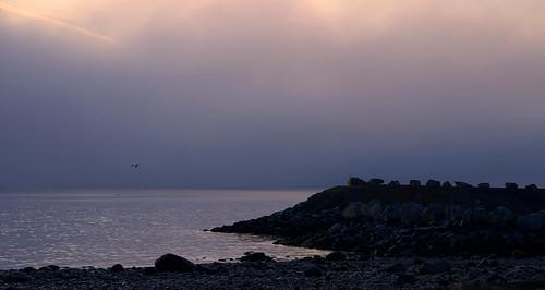 sunrise sky clouds fog sea rocks seagull nikon d3400 tamron18400 affinity foggdukkers campbellriver beach bird