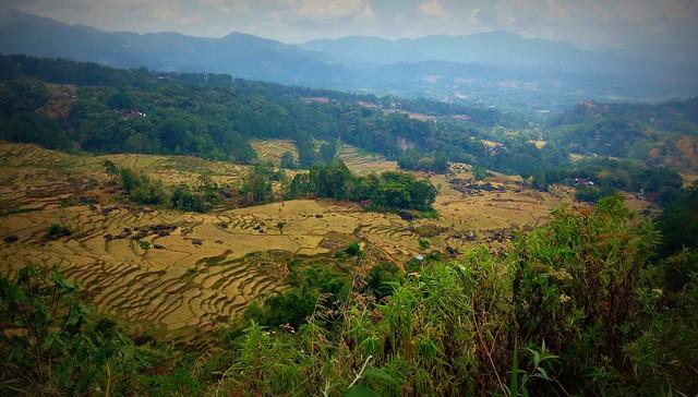INDONESIEN, Sulawesi, Im Norden, Auf dem Land bei Batutumonga, trockene  Reisterassen zwischen urigen Wäldern , 17737/10758