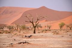 Deadvlei, Namib-Naukluft NP, Hardap Region, Namibia