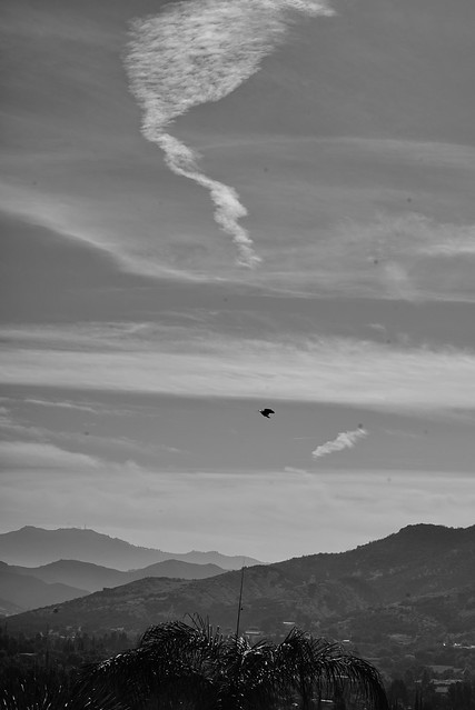 1969 Non-Ai Zoom Nikkor Auto 1:4.5 f=80mm~f=200mm lens w/ Nikkor yellow filter @ f/5.6 | Bedroom View this AM