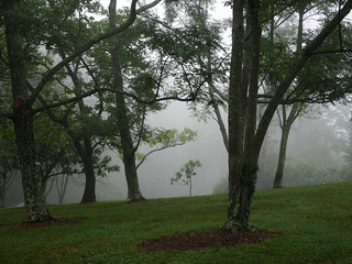 Sapling in the tree grove