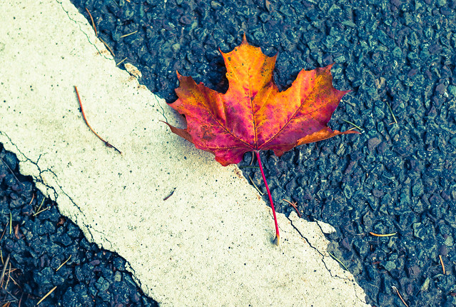 Autumn Streets
