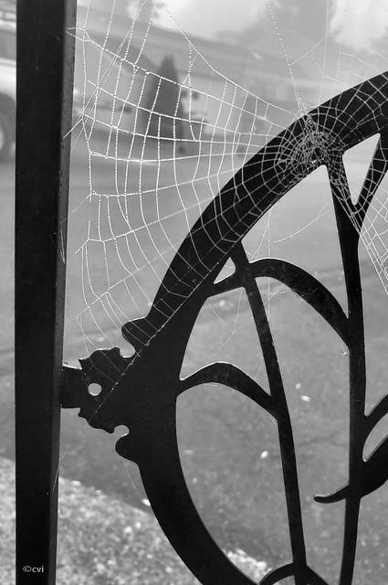 Autumn Web