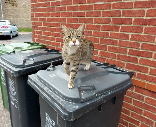 Cat on bin