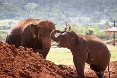 Elephant Nature Sanctuary