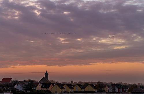 iffezheim sonnenuntergang ort dorf gebäude kirche vögel himmel rot farben wolken