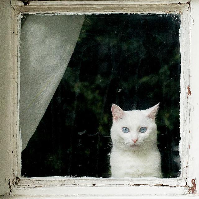 White cat in a white frame