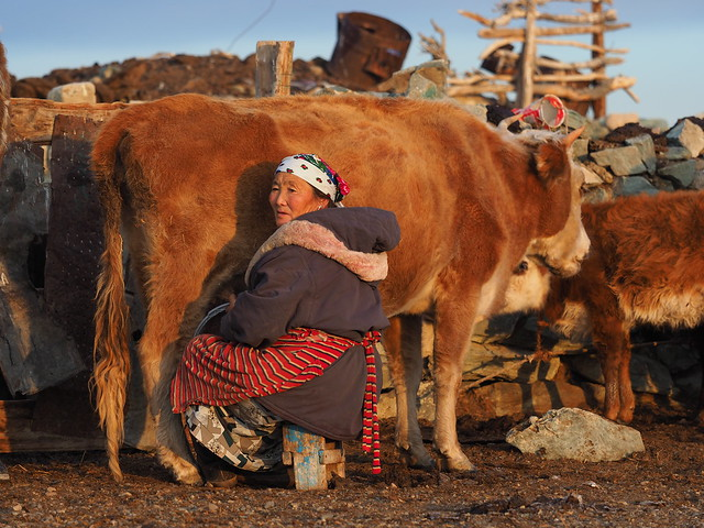Milking cows is one of the many daily chores for Kazakh women