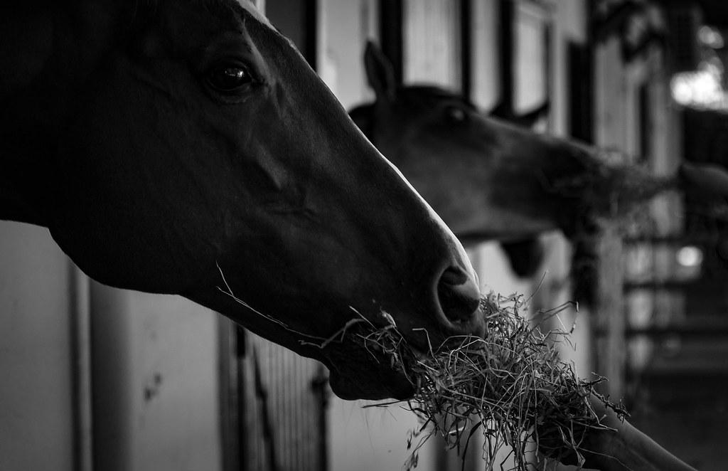 Yarış Atı 1