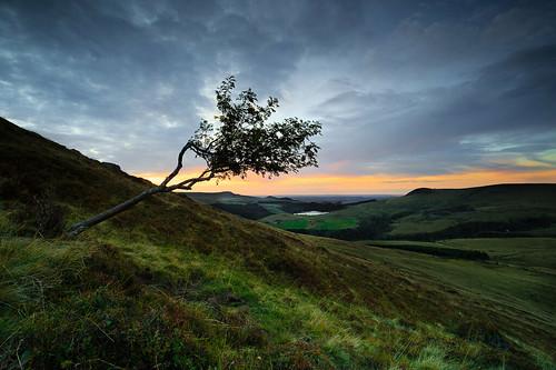 sunset sancy tree auvergne