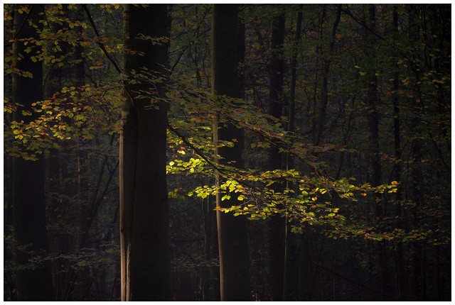 Light and the forest