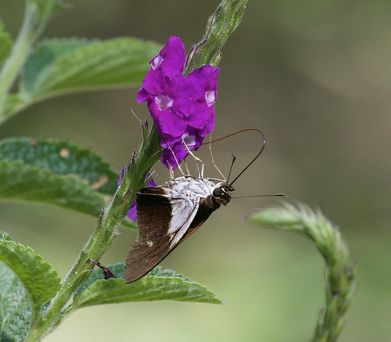 Butterfly 199A7371