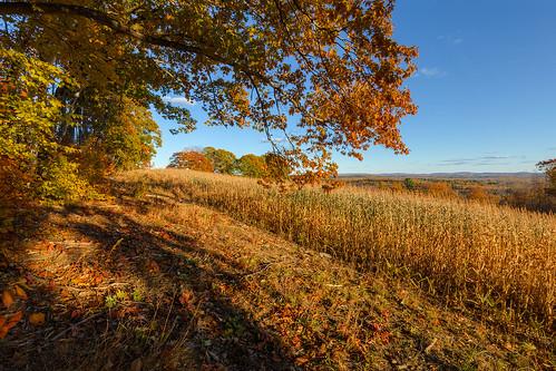autumn autumnseason fall fallseason seasons corn farming agriculture maine mainehighlands piscataquiscounty landscape rural hills trees sangerville sangervillemaine newengland field fieldcorn grain