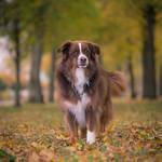 Hector - av Pics by Susie J