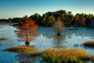 Autumn shows it's colors on one of the lakes of the Noxubee Refuge.....