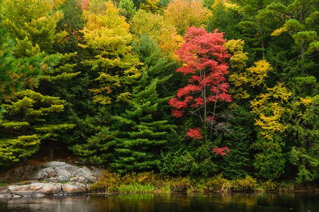 Muskoka Autumn Scenes -0937