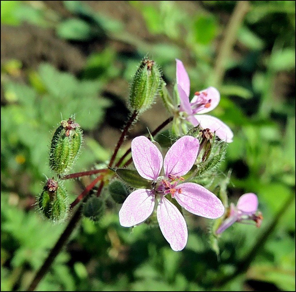 Касарги 8819 Flores.