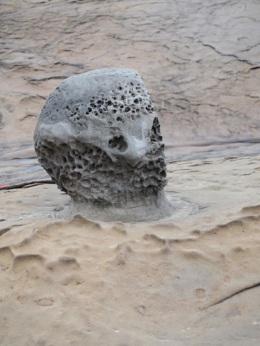 Spotted this stone popping out on the beach by itself. Looks like Alien's Head. | by huislaw