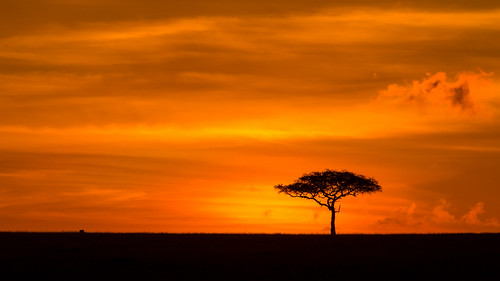 narokcounty kenya nature beautiful spectacularlandscape landscape sunrise naturereserve maranorthconservancy red view sky clouds tree silhouette kenyasnature africa