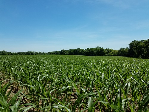 Photo of agricultural field